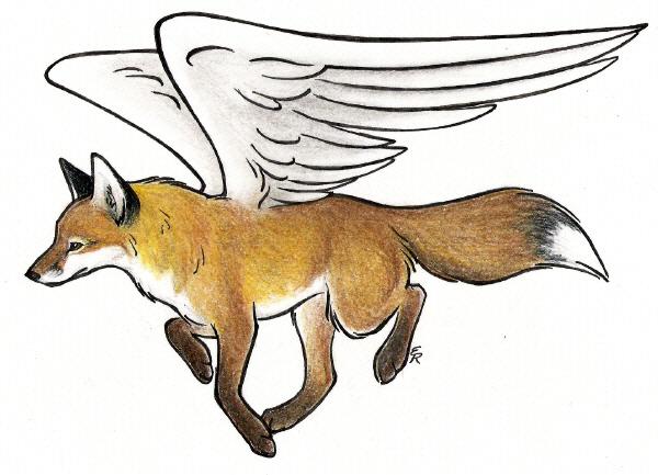 600x433 Desktop Flying Foxes Images