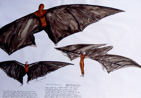 490x341 Robyn Gordon Fruit Batflying Fox Drawing, 1995