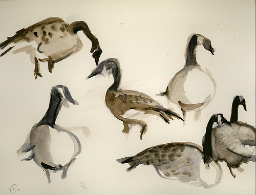 500x381 Canada Geese Canada Goose, Watercolor And Drawing Reference