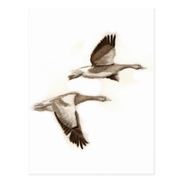 260x260 Goose Drawing Gifts On Zazzle Uk