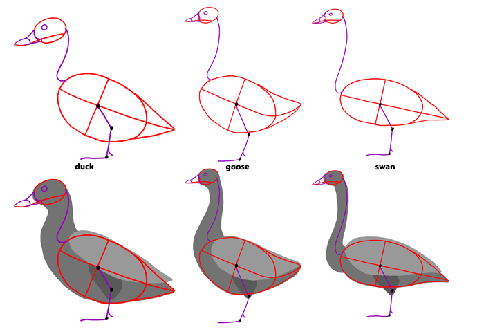 700x483 How To Draw Birds Step By Step Instructions
