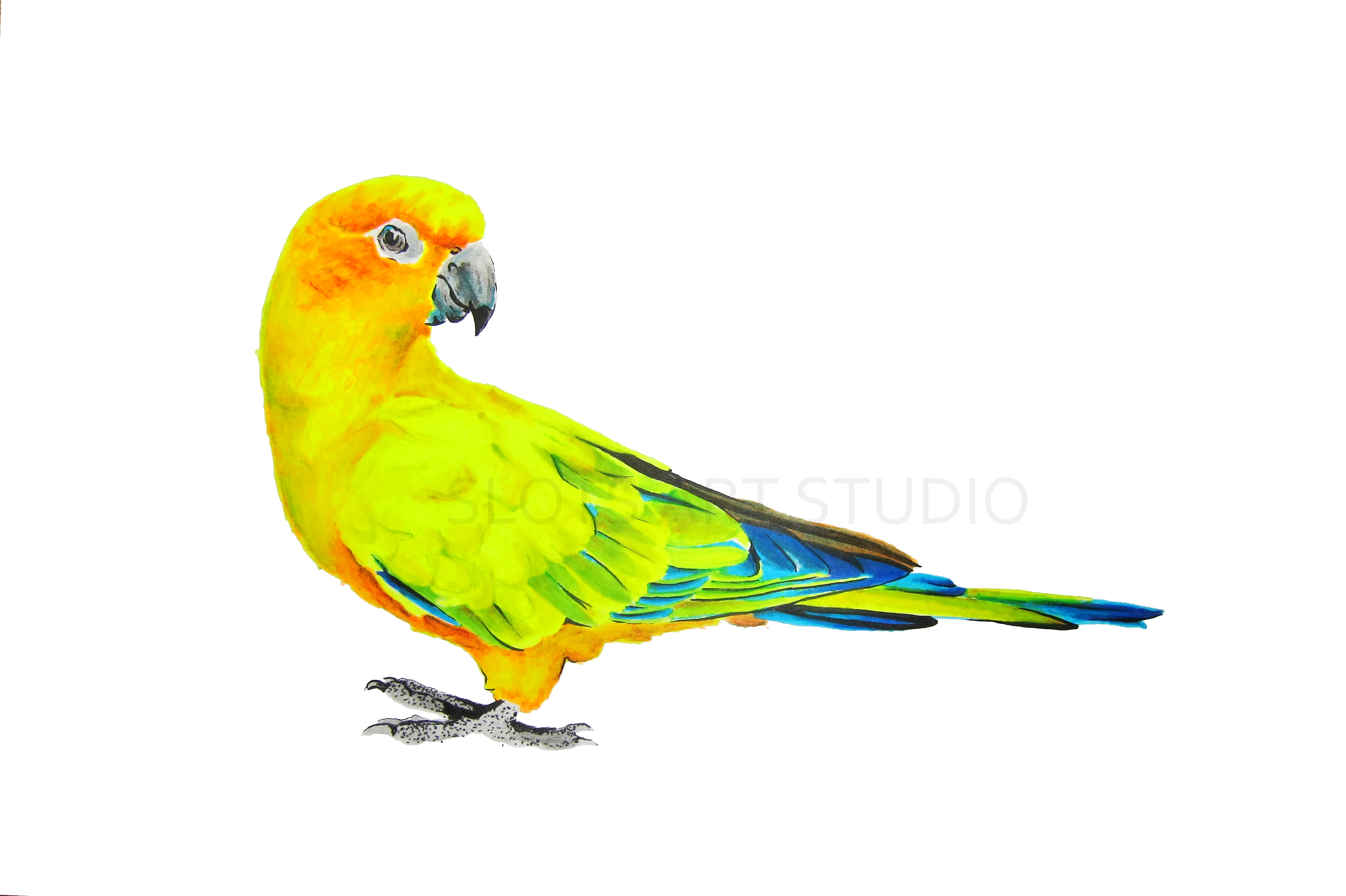 Flying Parrot Drawing At GetDrawings