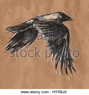 300x320 Vector Drawing Flying Crow On White Background Stock Photo