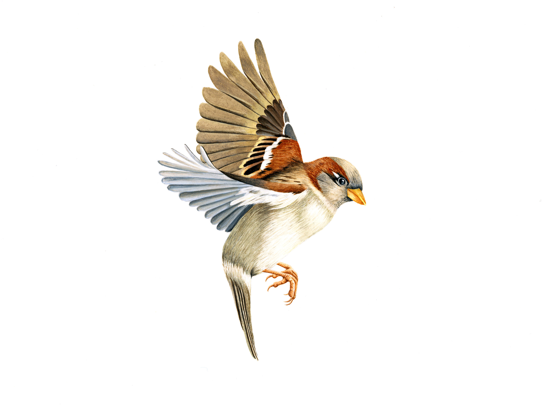 3000x2250 Anybody Here A Fan Of Bird Art