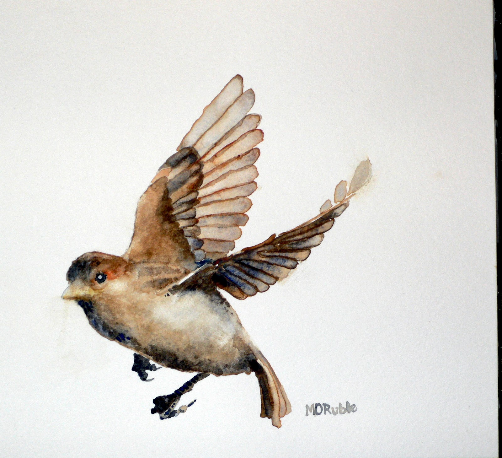 1600x1459 Beautiful Martin Ruble Sparrow Watercolor. Love The Gesture. If