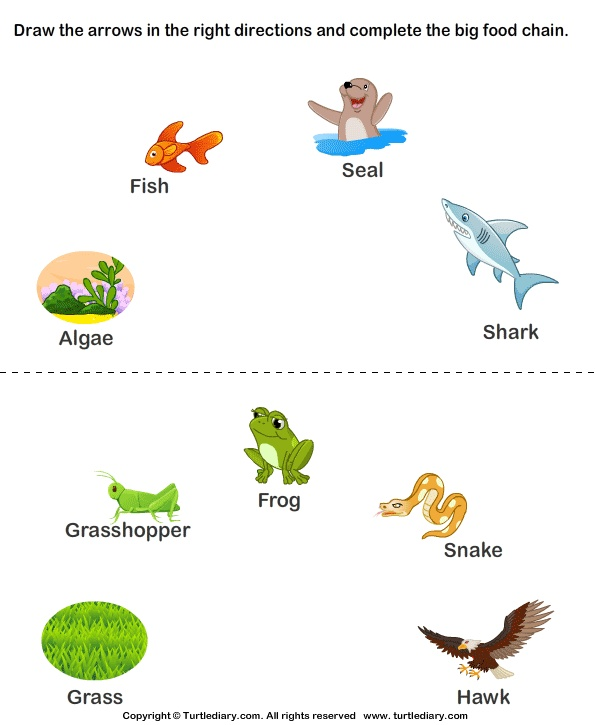 Food Chain Drawing At Getdrawings Free For Personal Use. 595x725 125 Best Food Chain S On Pinterest Chains Webs. Worksheet. Ocean Food Web Worksheet At Clickcart.co