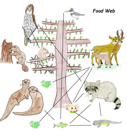 432x476 Drawing Food Webs With Own Animal Art
