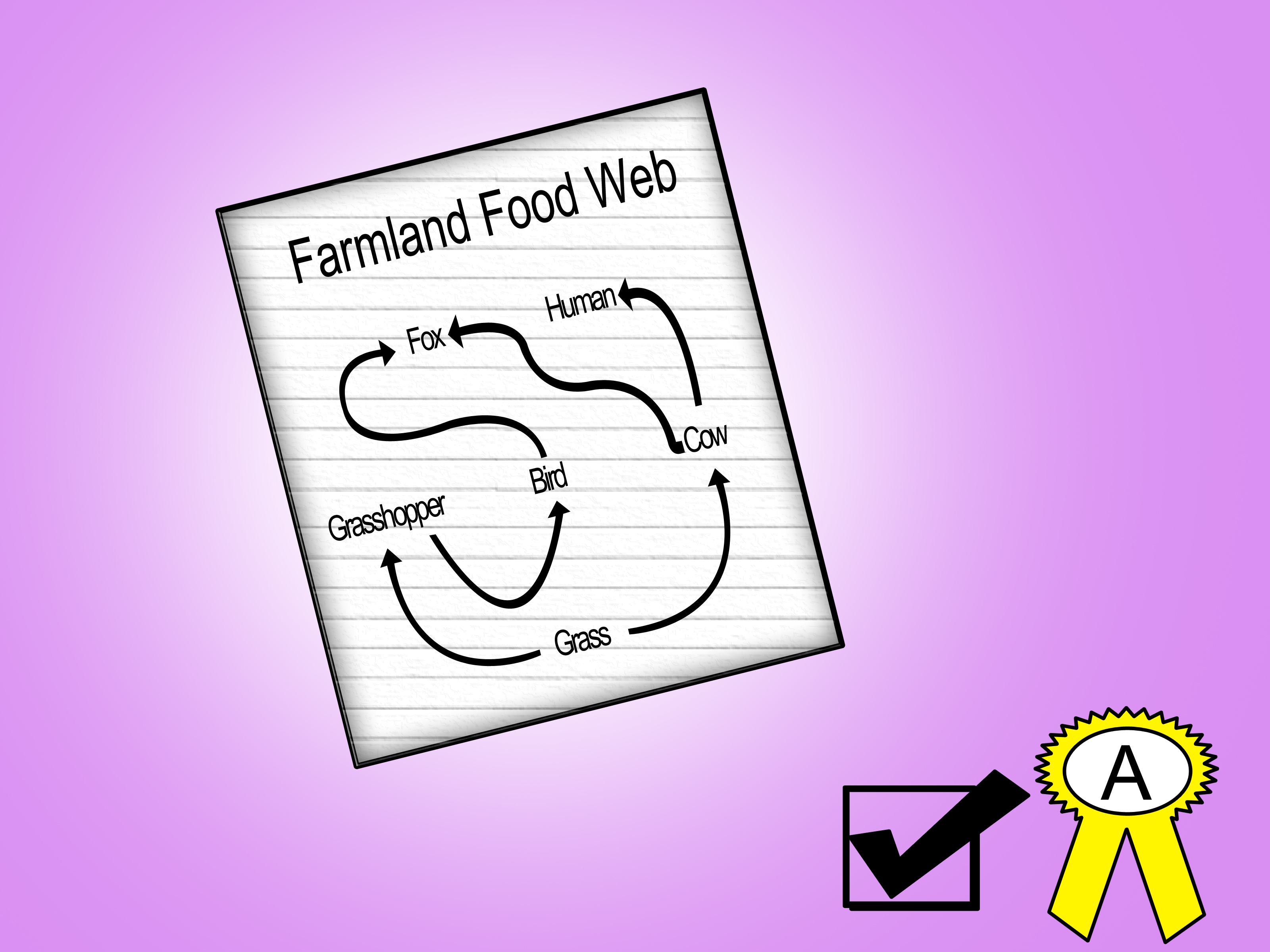 3200x2400 How to Draw a Food Web 5 Steps (with Pictures)