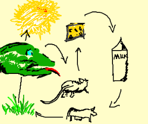 300x250 The Lizard Food Chain