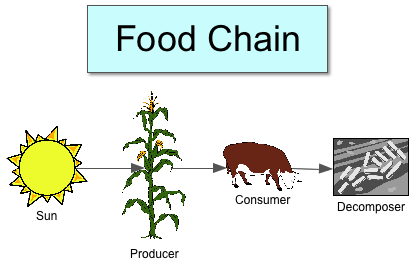 food chain drawing at getdrawings com free for personal use food rh getdrawings com