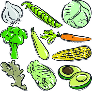 374x368 Vegetable Food Drawing Free Vector Download (93,471 Free Vector