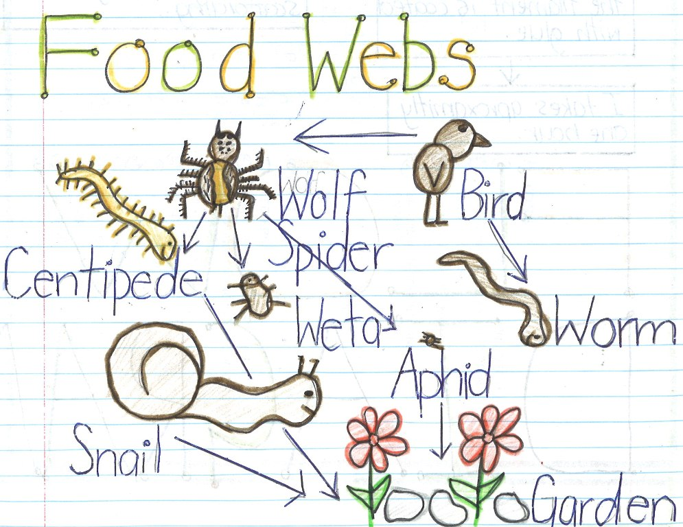 Food Web Drawing At Getdrawings Free For Personal Use Food Web