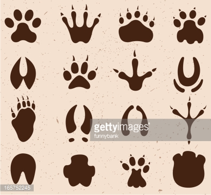432x398 Drawing Of Vector Muddy Footprint Symbols. Footprints