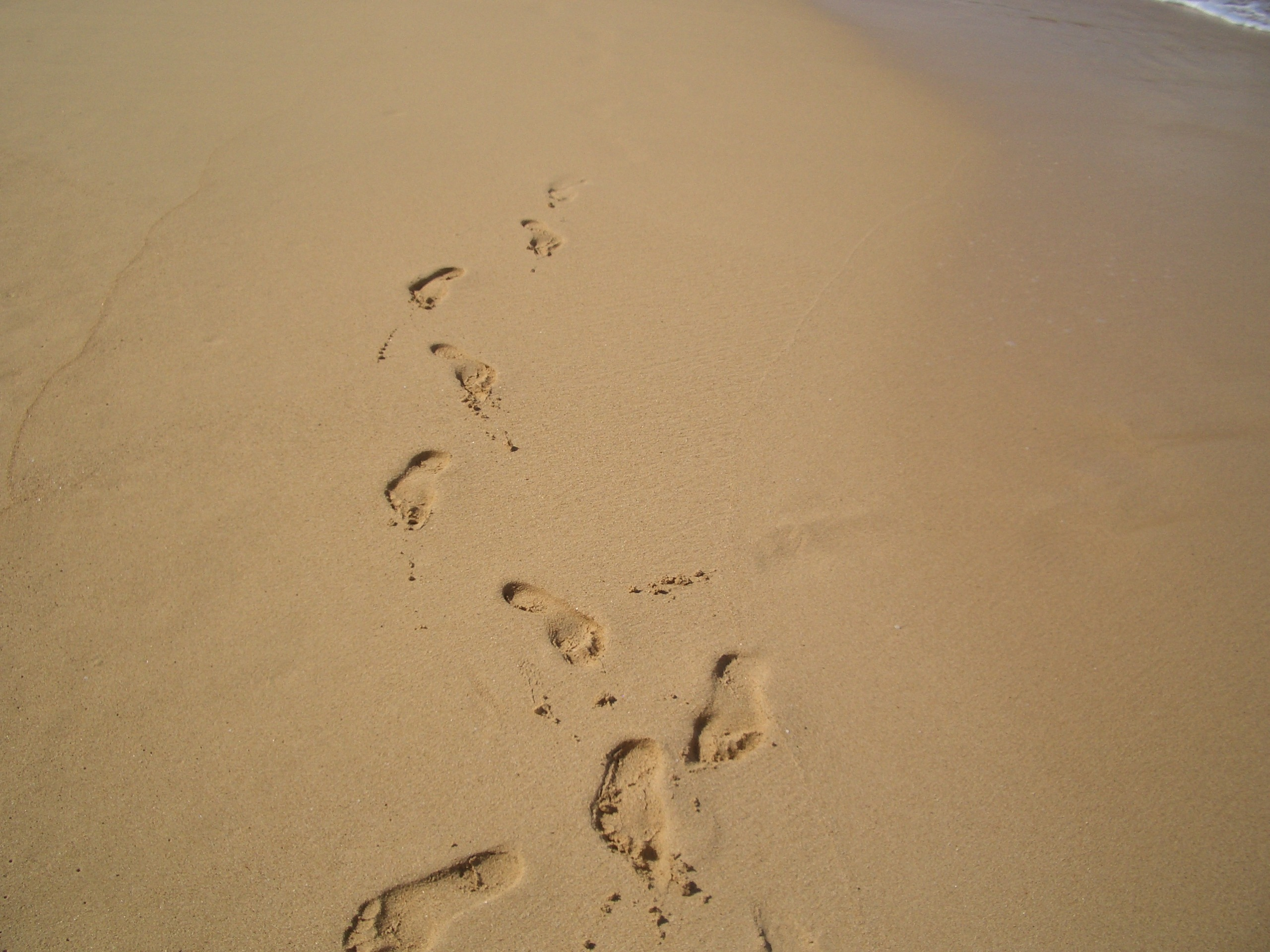 2560x1920 Free Images Beach, Coast, Path, Outdoor, Sand, Wing, Wood, Track
