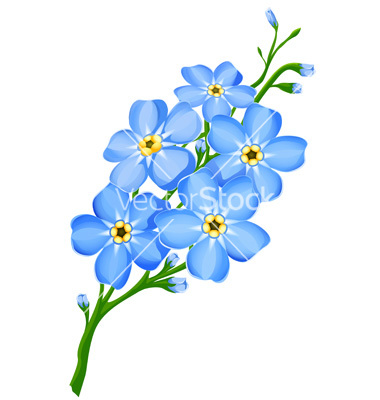 380x400 Forget Me Not Flower Drawings Forget Me Not Flowers Vector