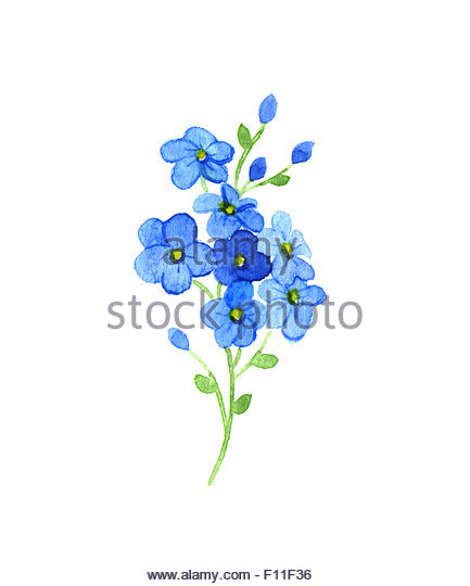 433x540 Forget Me Nots Drawing Stock Photos Amp Forget Me Nots Drawing Stock