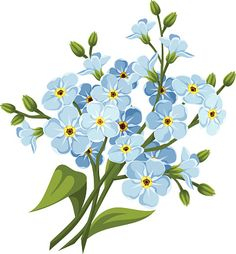 236x254 Forget Me Nots On White Canvas Print Canvas Art By Sharon
