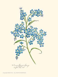 236x314 Image Result For Small Forget Me Not Tattoo Forget Me Not