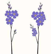 219x230 Forget Me Nots Flowers Forget, Flowers And Gardens
