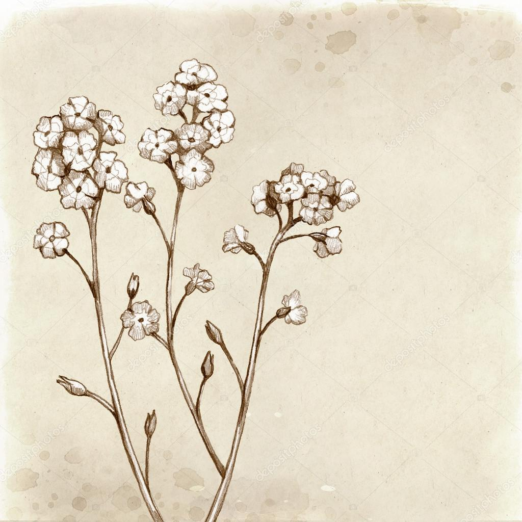 1024x1024 Forget Me Not Flowers Drawing. Stock Photo Sashsmir
