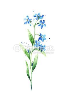 236x333 Blue Forget Me Not Flower Isolated On White Background, Watercolor