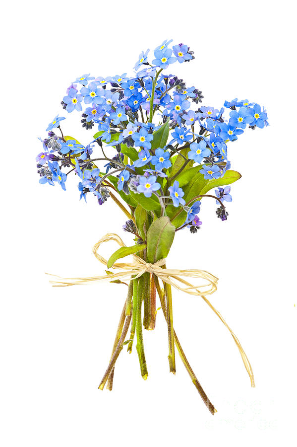 599x900 Bouquet Of Forget Me Nots Photograph By Elena Elisseeva