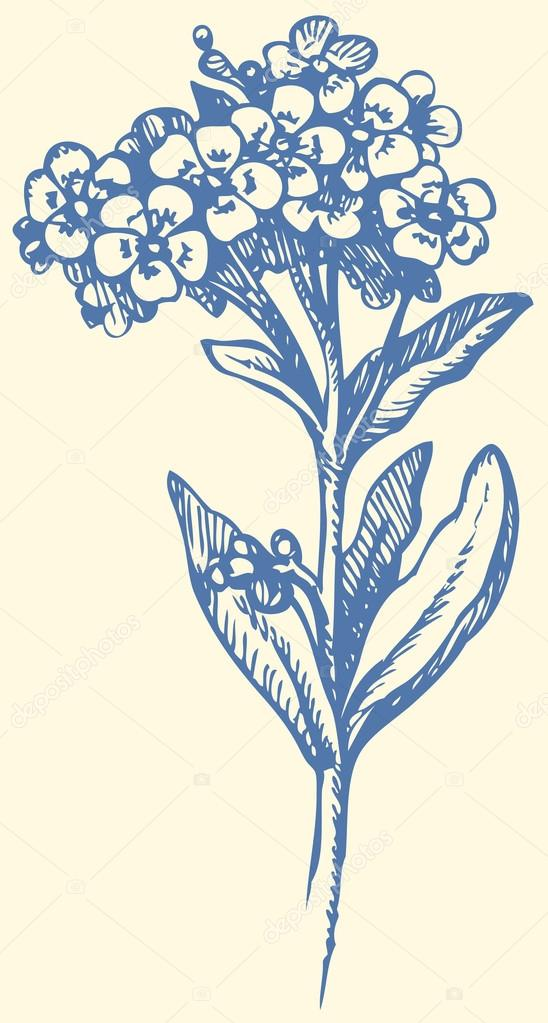 548x1023 Vector Drawing. Sprig Of Forget Me Not Stock Vector Marinka