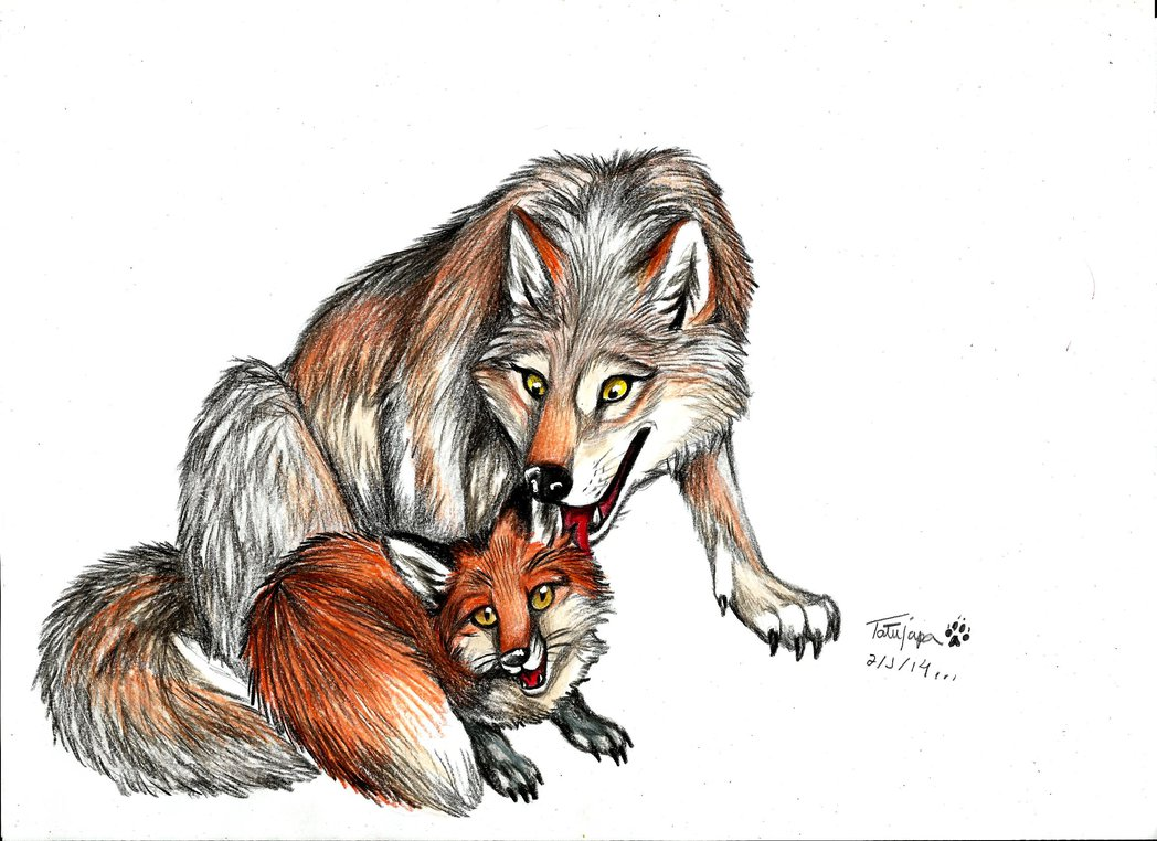 1048x762 The Fox And The Wolf By Tatujapa
