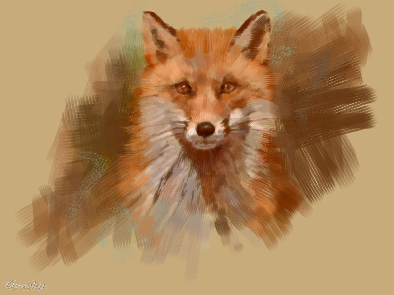 800x600 Red Fox Drawing Red Fox An Animals Drawing By Viridian