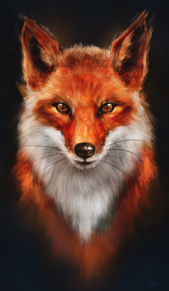 580x1000 Red Fox Or Firefox By Sven Werren