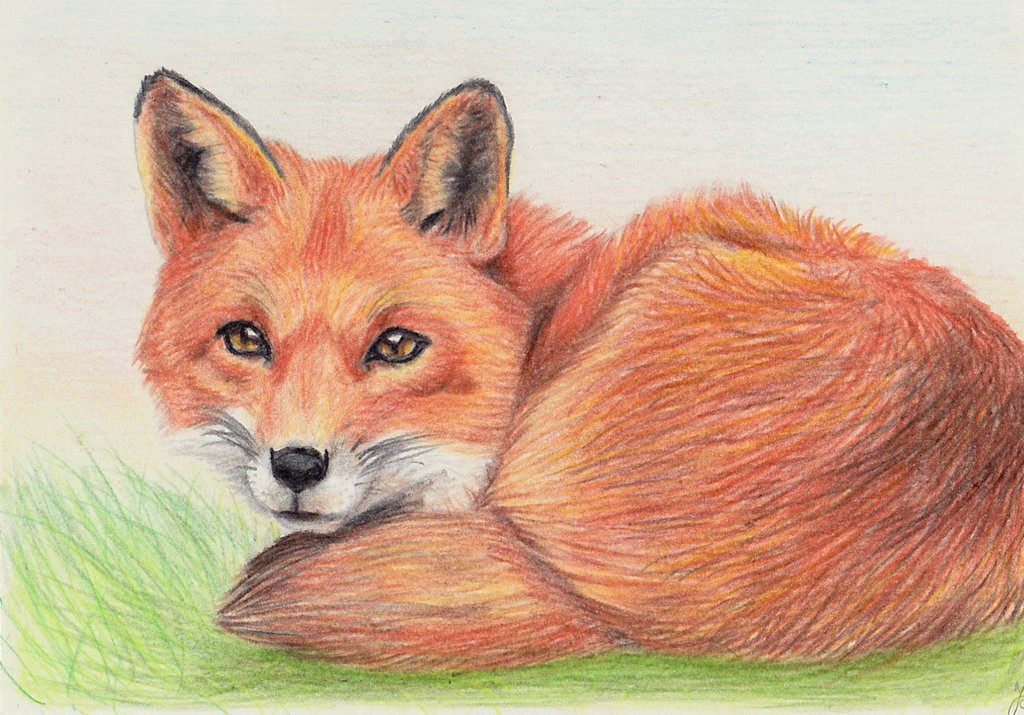 1024x715 Fox