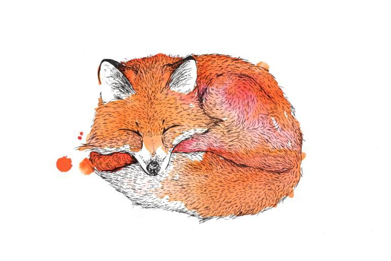 770x514 Saatchi Art Sleeping Fox Drawing By Agnes Meintjes