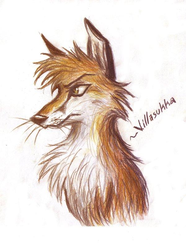 600x789 Fox Drawing By Villasukka
