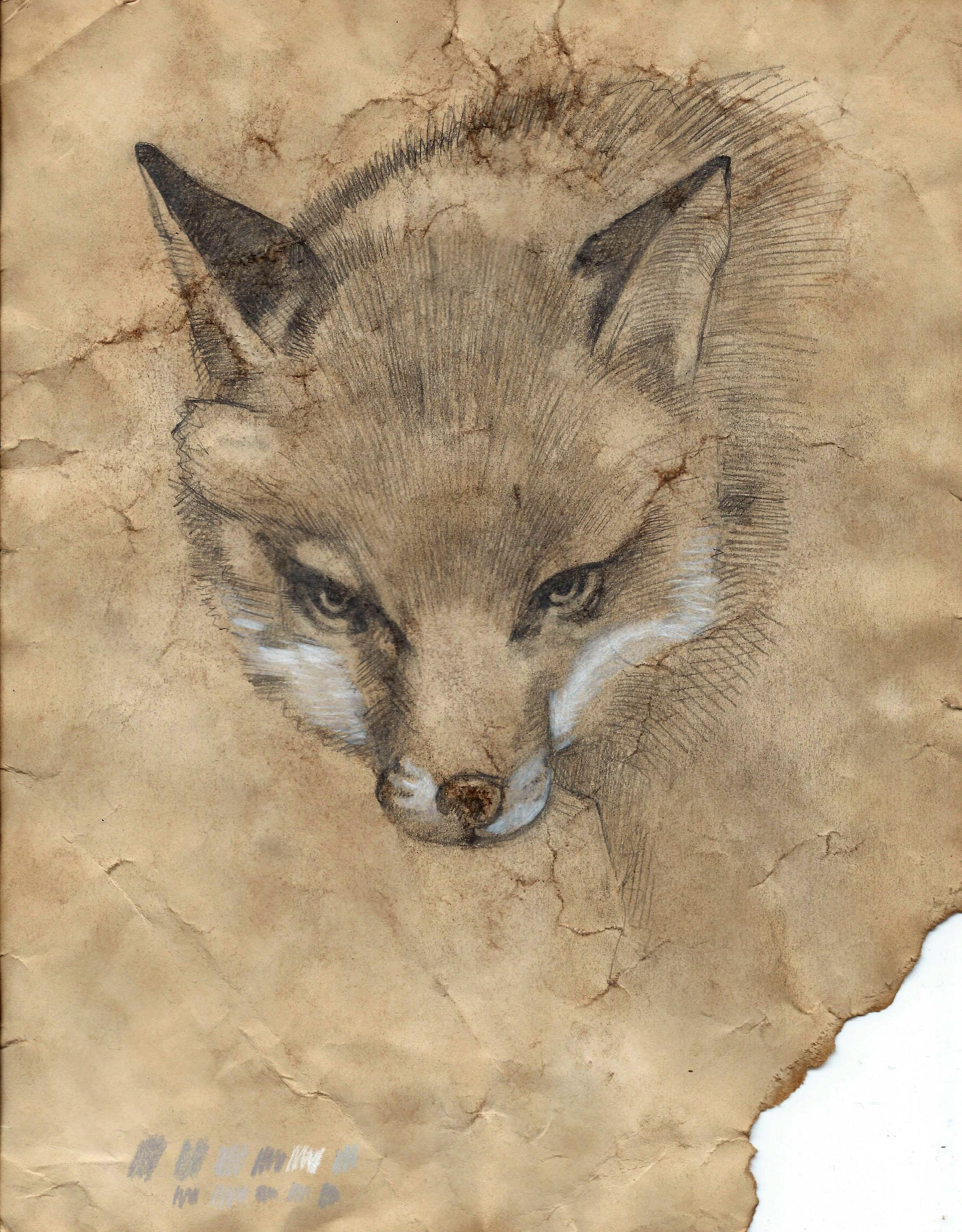 2516x3223 Fox Drawing Daniel Barkeye Tictail