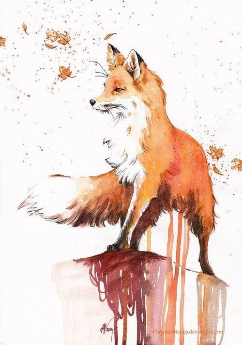 500x712 Pin By Ronelle Oosthuizen On Other Foxes, Draw