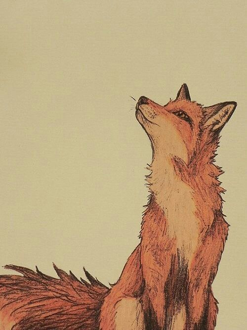 500x667 This Image Of Fox Is A Wallpaper Very Beautiful