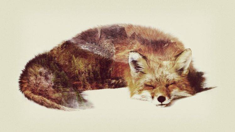 748x421 Fox Double Exposure Animals Wallpapers Hd Desktop And Mobile