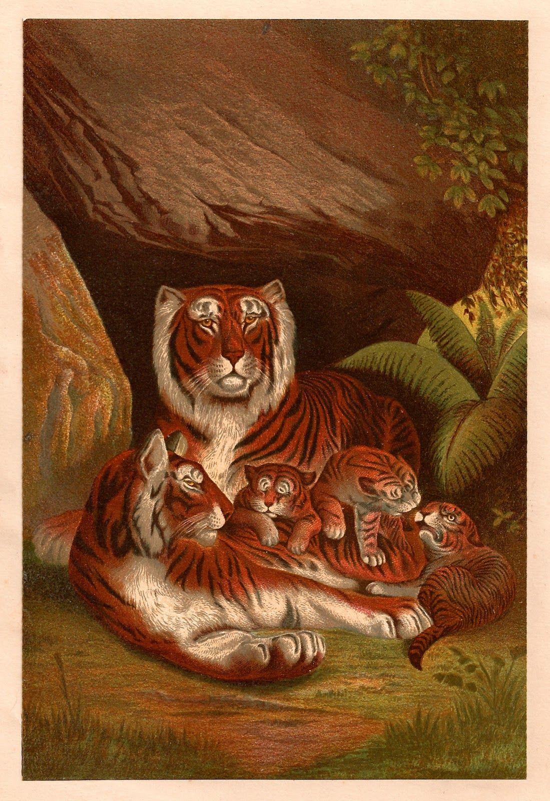 1099x1600 Antique Images Free Animal Graphic Antique, 1885 Illustration