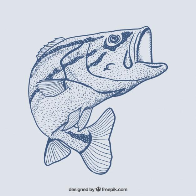 626x626 Hand Drawn Fish Vector Free Download