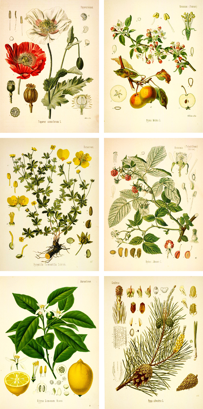 660x1326 Free Printable Plant Illustrations The Painted Hive Wall Decor