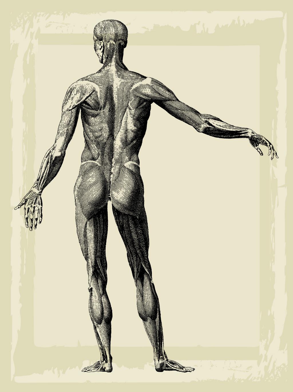 1024x1370 Medical Illustration Vector Art Amp Graphics