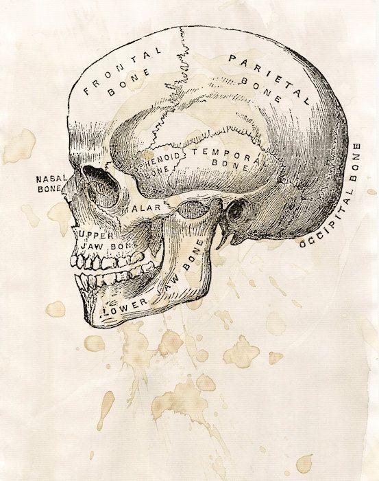 553x700 Skull Diagram
