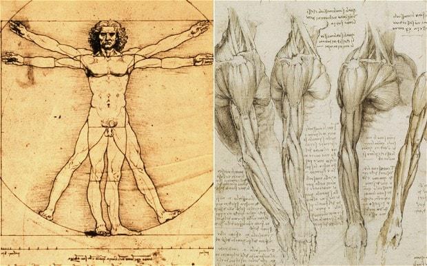 620x387 Leonardo Da Vinci Human Anatomy Drawings Leonardo Da Vinci Was