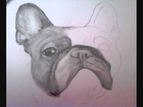 480x360 French Bulldog Drawing.wmv