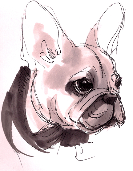 432x555 French Bulldog Pup By Beavotron