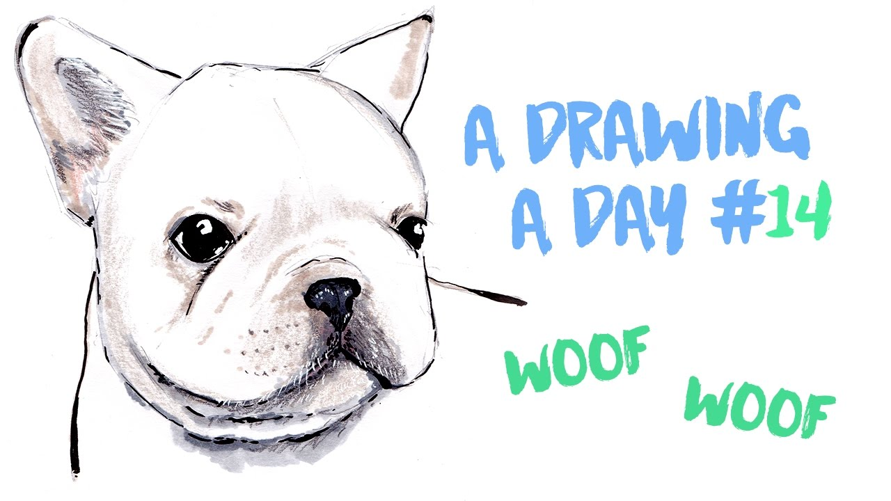 1280x720 French Bulldog Puppy (Drawing Timelapse)