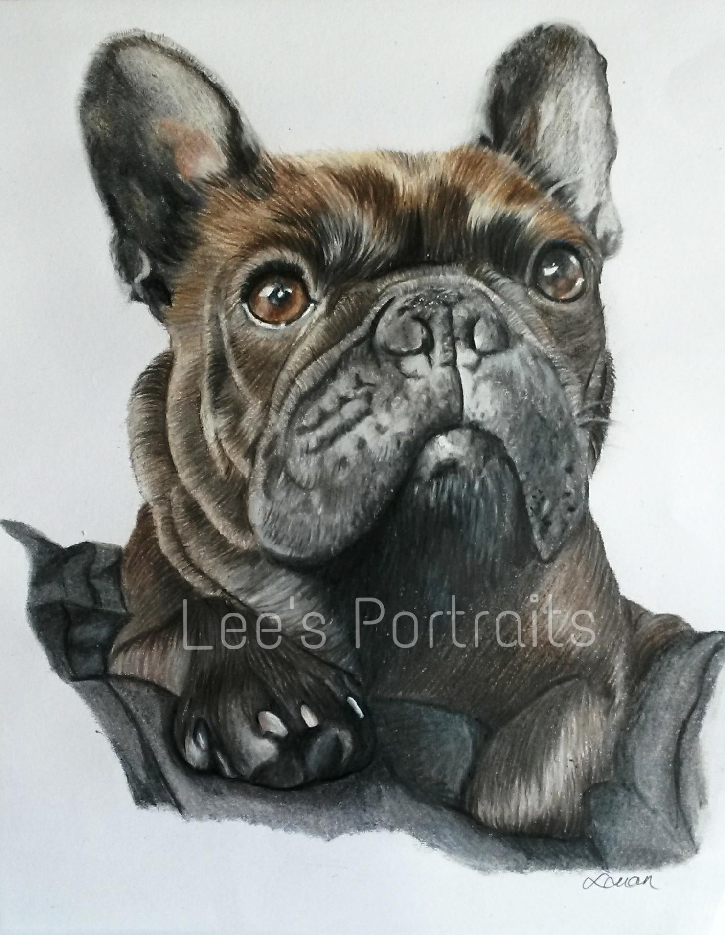 1482x1913 French Bulldog Drawing Of My Baby Girl