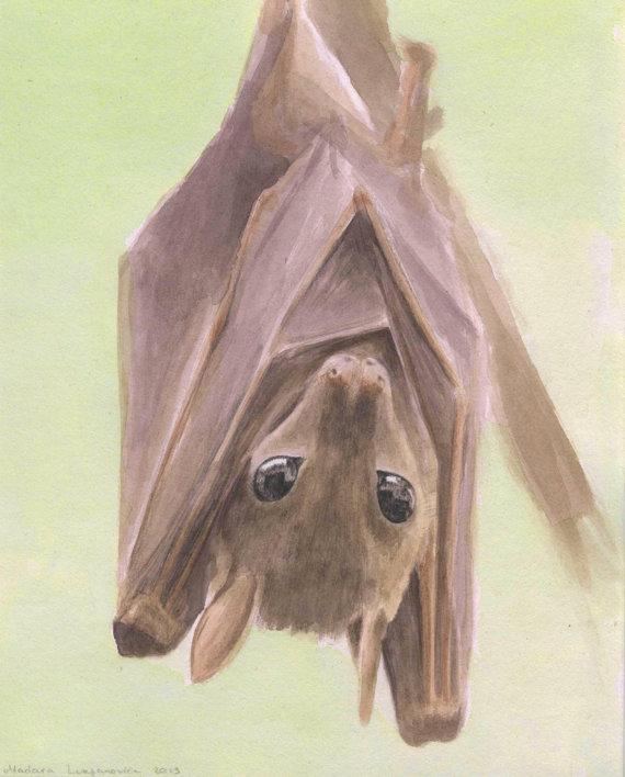 570x708 Fruit Bat Painting. Bat Painting. Bat Watercolor. Original
