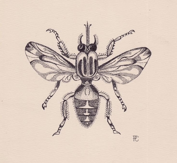 736x681 Stippling Drawings Fruit Fly Illustration By Stippling