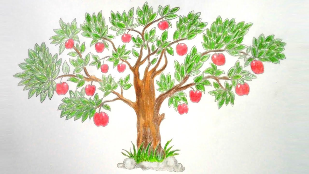 Fruit Tree Drawing at GetDrawings.com | Free for personal use Fruit ...